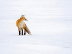 Breathtaking Portraits of Wild Animals by Kevin Biskaborn