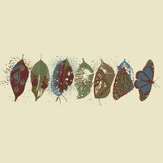 butterfly, metamorphosis