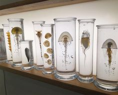 display, aquatic life, glass