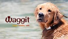 Waggit: Wearable High Tech for Man's Best Friend