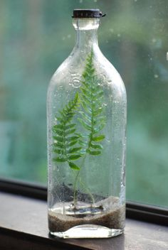 Tumblr #enviroment #plant #bottle
