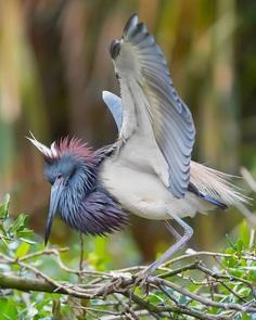 #birdsofinstagram: Fantastic Bird Photography by Jeffrey P Karnes
