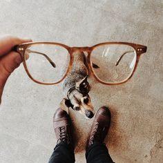 Likes | Tumblr #glasses #shoes #floor #man #dog
