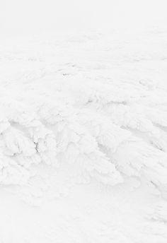 white #white