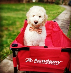 Most Dog Friendly Stores in America - Academy