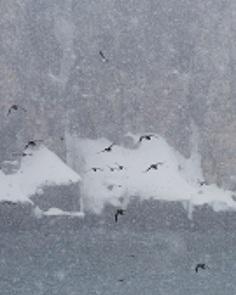 Photographer Nick Cobbing Captures Amazing Arctic Landscapes