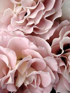 Likes | Tumblr #pink #roses