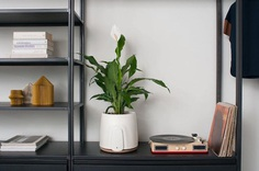NATEDE: Smart Natural Air Purifier - IPPINKA NATEDE is a natural air purifier that uses plants to filter the air. The design incorporates the natural process of phytoremediation to purify the air. Unlike other air purifiers, NATEDE uses an aspect of nature that is perfectly designed to purify air along with a filter that is reusable to make all components of it sustainable.