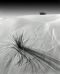 Black and White Photography by Peter Paul #inspiration #white #black #photography #and