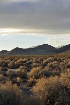 Mojave Desert, November 2014.