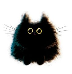 Meowoodle #kitten #meowoodle #fat cat