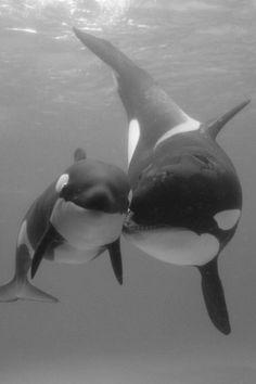 Heartwarming Photos of Animals Showing True Love Knows No Bounds