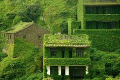 #house #green #nature