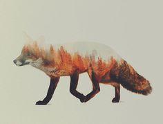 Double-Exposure Animal Portraits By Norwegian Photographer #fox