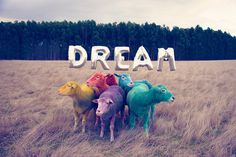 gray malin the dream series rainbow sheep #sheep