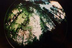 Fisheye02 - ART IS WAR - by Stephen Dorman #tree #sky #photo #picture #fisheye #war #dorman #is #photography #art #stephen #forest #trees #green