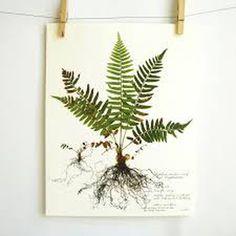 Image result for plant prints