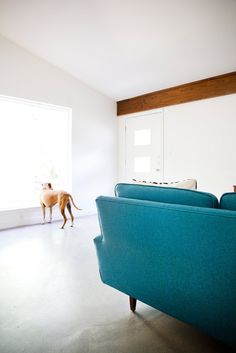 Boxer in a mid-century minimalist living room. Photo by Adrienne Breaux. #dog #pet #midcenturymodern #livingroom #gabledceiling