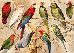 Convoy #birds