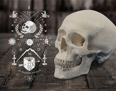 Bella Martribus Detestas #illustration #skull