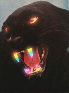 idixK4.gif (GIF Image, 400x534 pixels) #panther