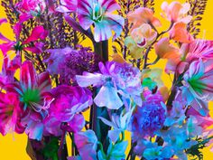 Torkil Gudnason | PICDIT #photo #color #photography #art #flowers