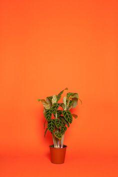 _mg_1424 #photography #plant