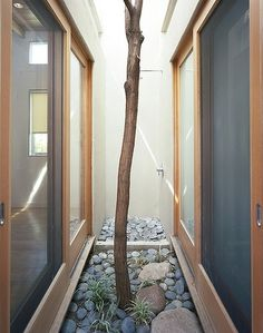 All sizes | Pocket Courtyard | Flickr - Photo Sharing! #interior #house #tree #courtyard #architecture