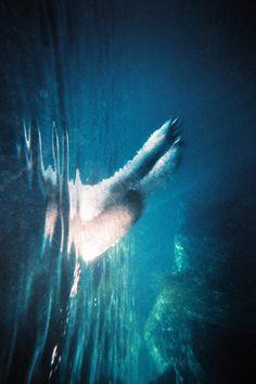 Photographer Theo Gosselin #flipped #photography #paws #swim #splash #underwater #dog