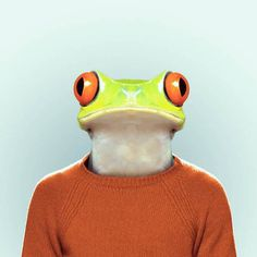 Zoo Portraits Wall to Watch #animal #photography #photo manipulation #portrait #jacket #frog #zoo #toad #tree frog
