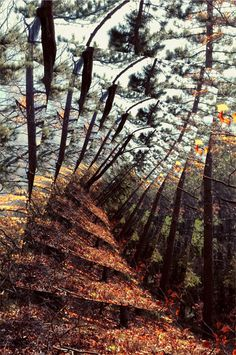 Susanne Uhlmann #graphic design #photography #germany #forest #psychedelic