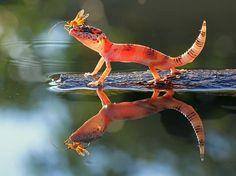 Amazing Macro Photography by Shikhei Goh | Cuded #amazing #goh #y #shikhei #photography #macro