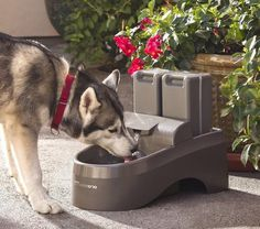 Drinkwell Indoor Outdoor Dog Fountain #tech #flow #gadget #gift #ideas #cool