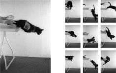 felixcontzen.de | work | katze mit marmeladenbrot #photography #cat