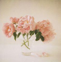 pink roses #roses #pink