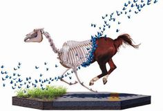 Scientific Textbook illustrations by Josh Keyes #josh #scientific #keyes #illustrations #textbook