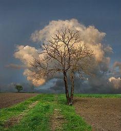 FFFFOUND! | NCOTB: June 2009 #tree