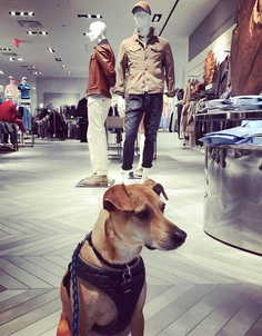Most Dog Friendly Stores in America - Saks Fifth Avenue
