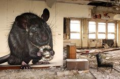 Black rat animal street art #graffiti #realism #street #art #realistic