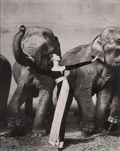 PRIVATE » Recommendations #photo #richard #avedon #dovima #1955 #fashion #elephants #50s #with