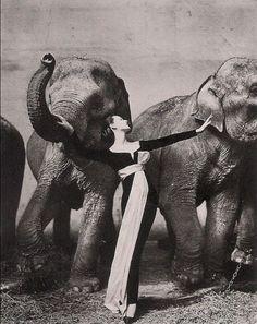 PRIVATE » Recommendations #photo #richard #avedon #dovima #1955 #fashion #elephants #50s #with