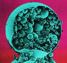 arborvitaemusings #collage #science
