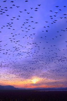 .. #sun #sky #birds #freedom #photography #blue #sunset #beauty