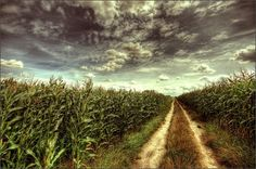 All sizes | Corn | Flickr - Photo Sharing! #photography #corn