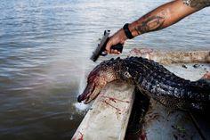 alligator #inspiration #photography #documentary