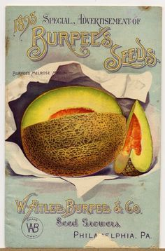 Vintage seed packaging #packaging #fruit #vintage #type #typography
