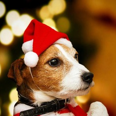 Christmas Pet Hat Santa Claus Hat for Cats Dogs Puppies