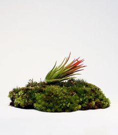 MOSSER #brand #terrarium #moss