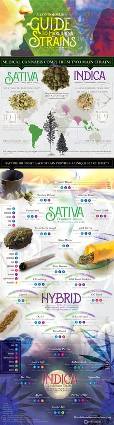If you are thinking of treating your chronic illness with medical marijuana, you should really know what strains are out there and what they