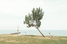 Penche avec ton arbre | La boite verte #octavius #paul